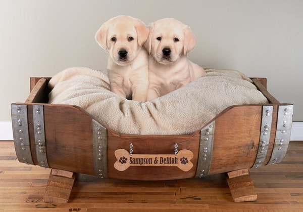 Cute Beds For Pets Combine With Interior Decoration Ideas 7