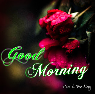 100 Good Morning With Rose Download Latest Images Kuch Khas Tech