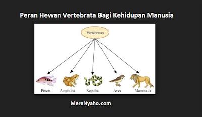 Peran Hewan Vertebrata Bagi Kehidupan Manusia, manfaat hewan vertebrata