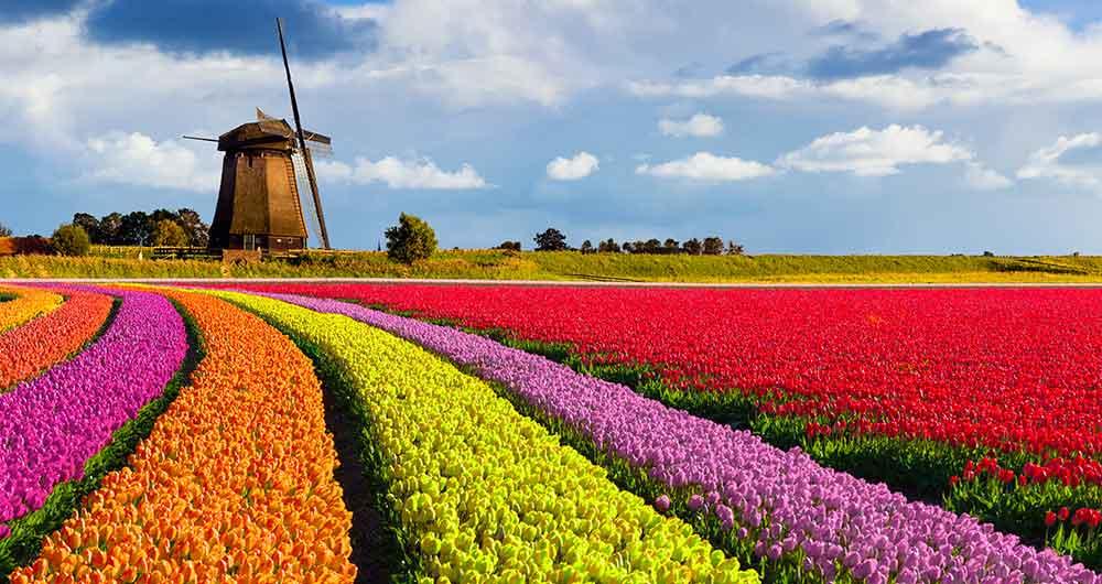 Τα χωράφια τουλίπας της Ολλανδίας -video