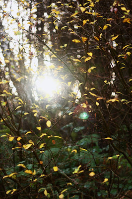 sun shining through the branches of a tree