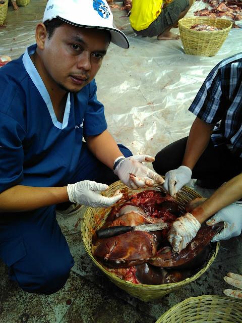 Pemeriksaan Postmortem oleh drh. Sugiarto, M.Si (dokter Oki)