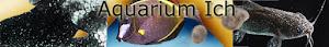 Aquarium Ich, freshwater, saltwater, Cryptocaryon, Ichthyophthirius multifilis