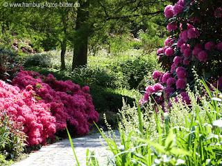 PLanten un Blomen Hamburg, Weg, Blumen