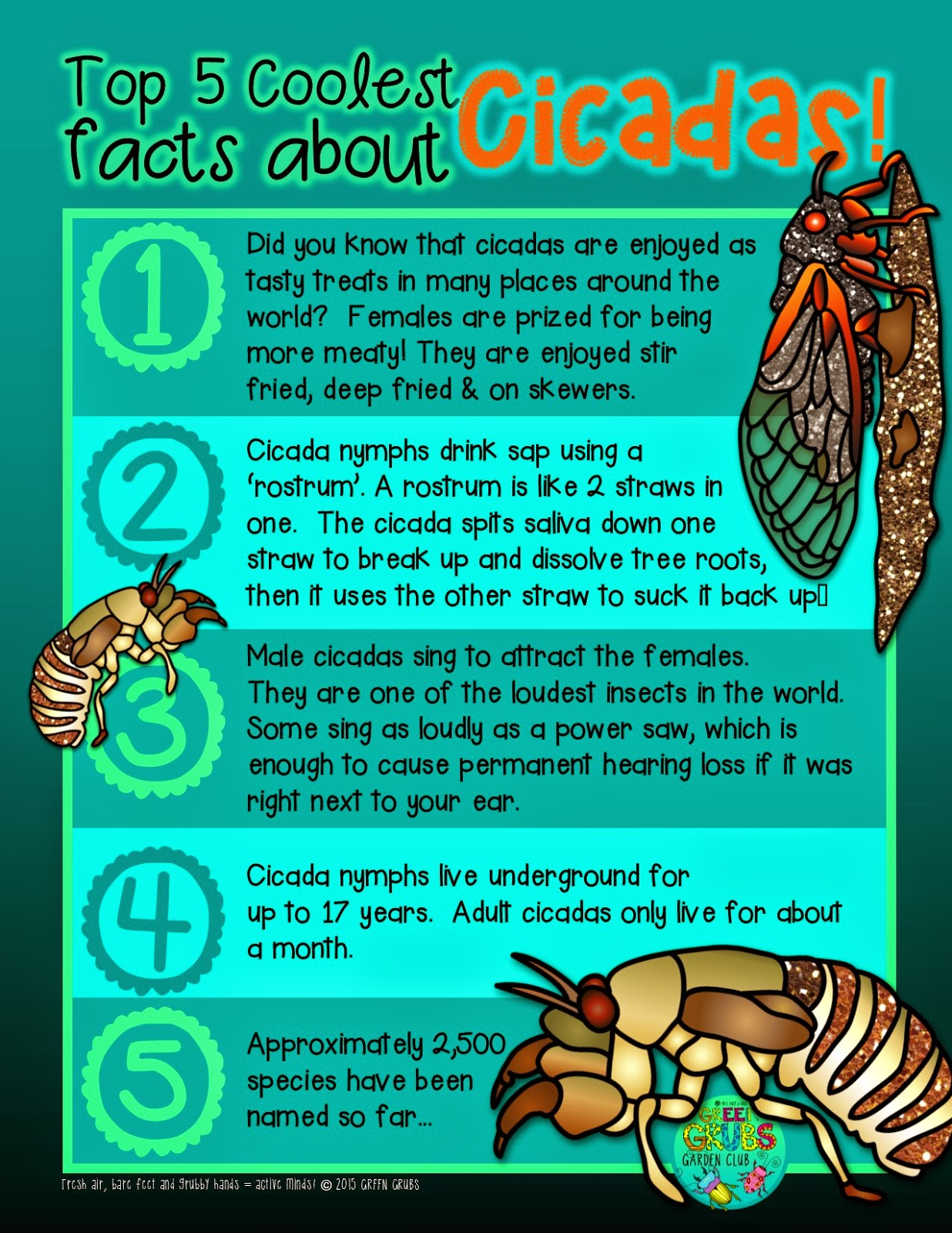 Green Grubs Garden Club Top 5 Coolest Facts About Cicadas
