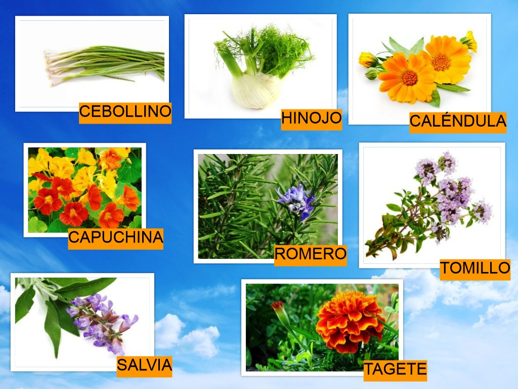 Diario de infantil 5 a os city vegetable gardens for Tipos de plantas aromaticas