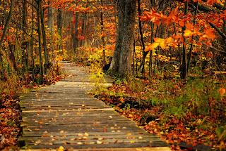 Falling Maple Leaves Wallpaper Banco De Im 193 Genes 14 Fotos Hermosas Del Oto 241 O Hojas De