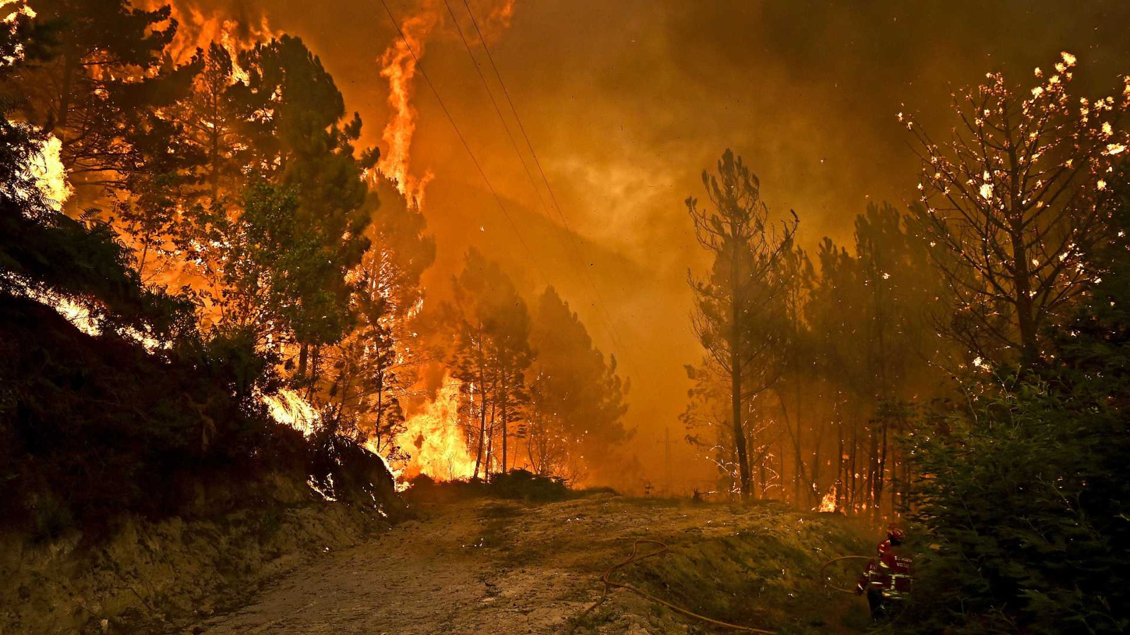 Wild Fires in Portugal: An overview