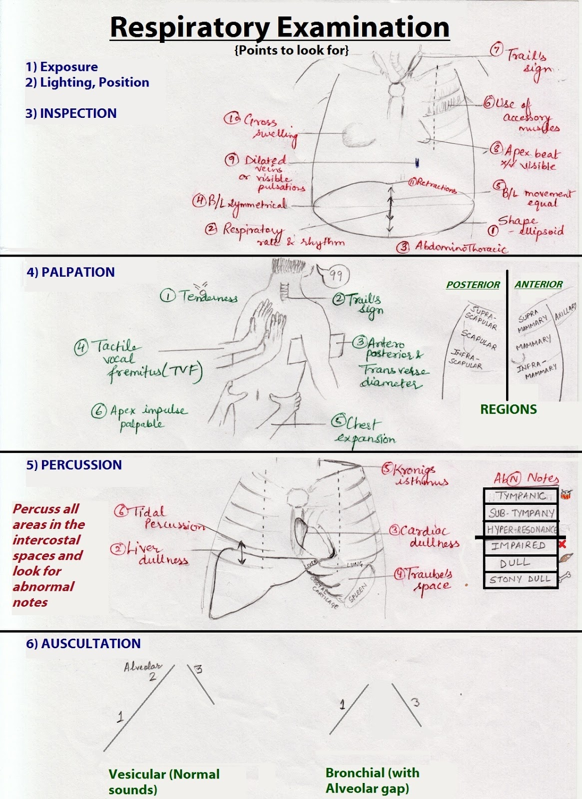 Chest Physical Examination
