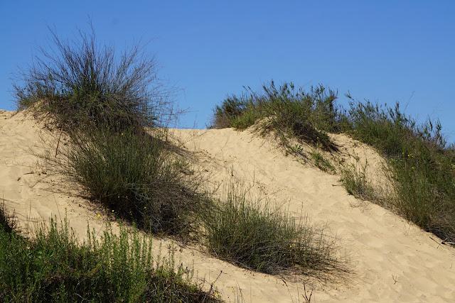 דיונת חול בפלמחים