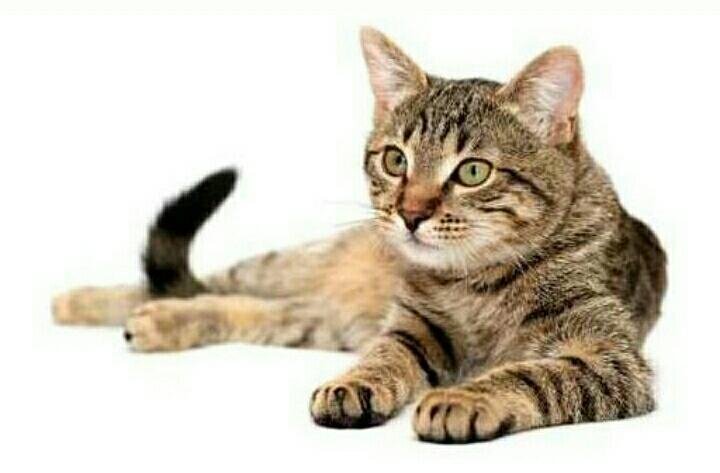Berbagai Mitos Yang Salah Tentang Kucing Berbagai Mitos Yang Salah Tentang Kucing