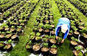pengertian-hortikultura-adalah