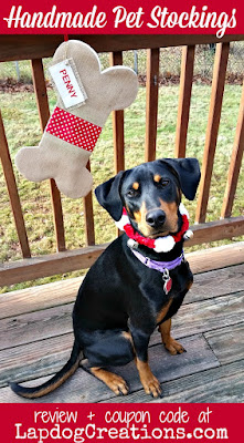 doberman mix rescue dog with christmas stocking