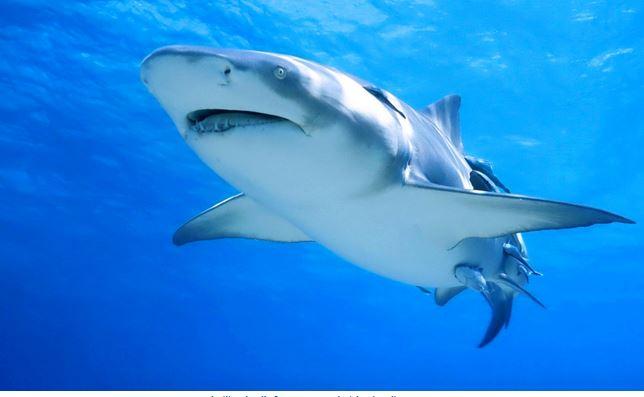 Download Gambar Ikan Untuk Picsart Download For Mac