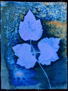 Wet cyanotype, Sue Reno, Image 25
