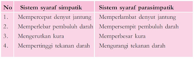 Sistem Saraf Tak Sadar/Otonom (Saraf Simpatik dan Parasimpatik) serta Urutan Mekanisme Gerak Refleks dan Gerak Biasa