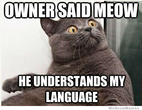 own nothing below i googled quot funny cat memes quot and there they were