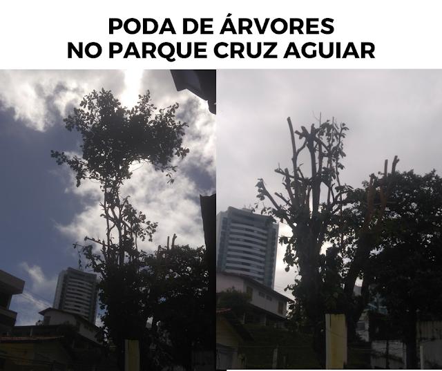 Morador do Parque Cruz Aguiar questiona poda das árvores executada pela prefeitura