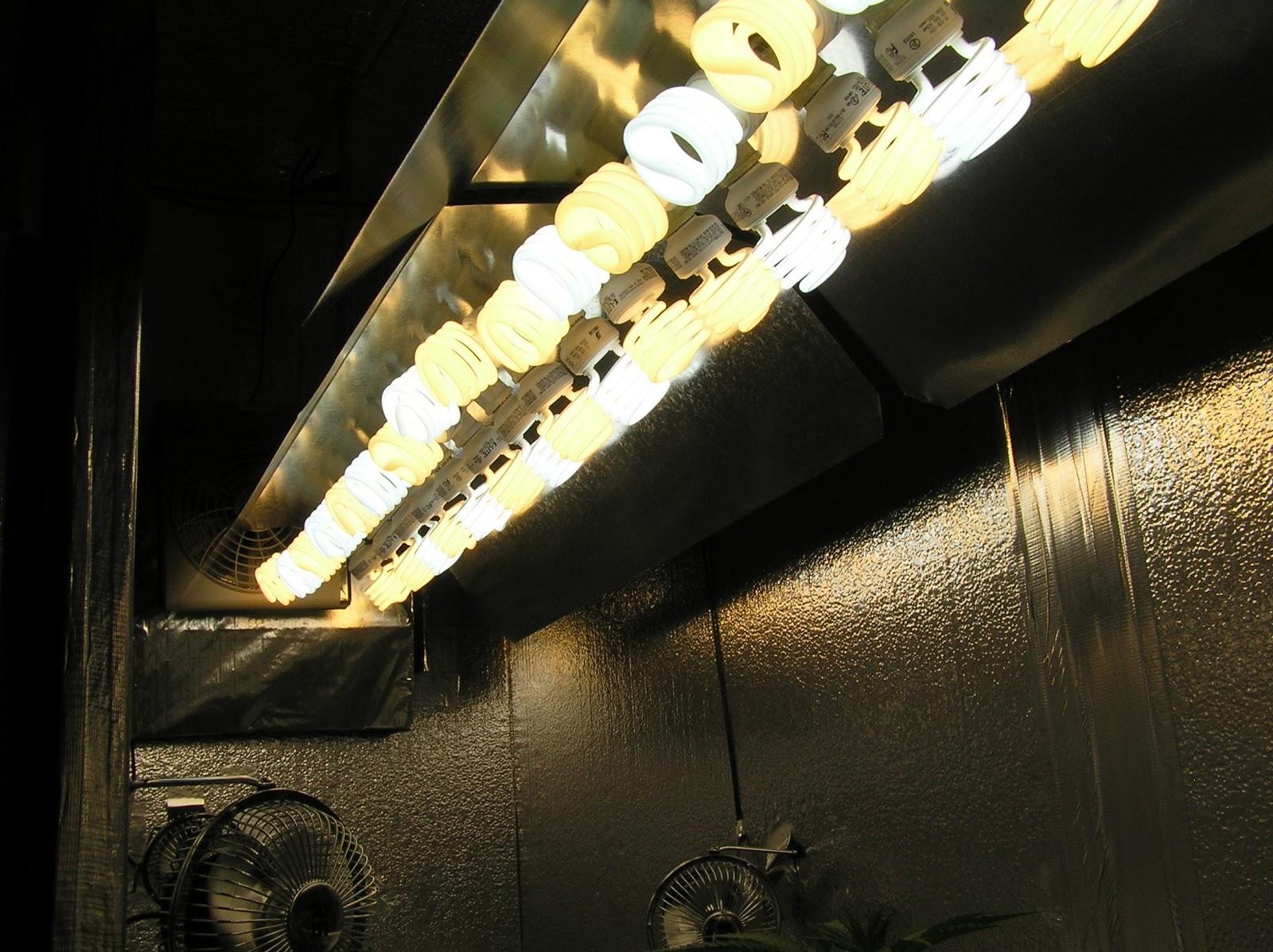 Cfl Vs Led Grow Lights