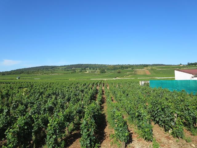 burgundy wine region