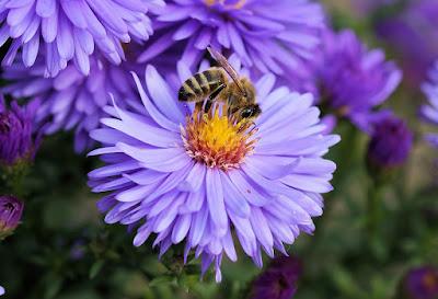 El polen y sus beneficios para la sexualidad