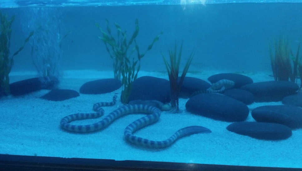 The Amazing Surat City Visit Jagdishchandra Bose Aquarium