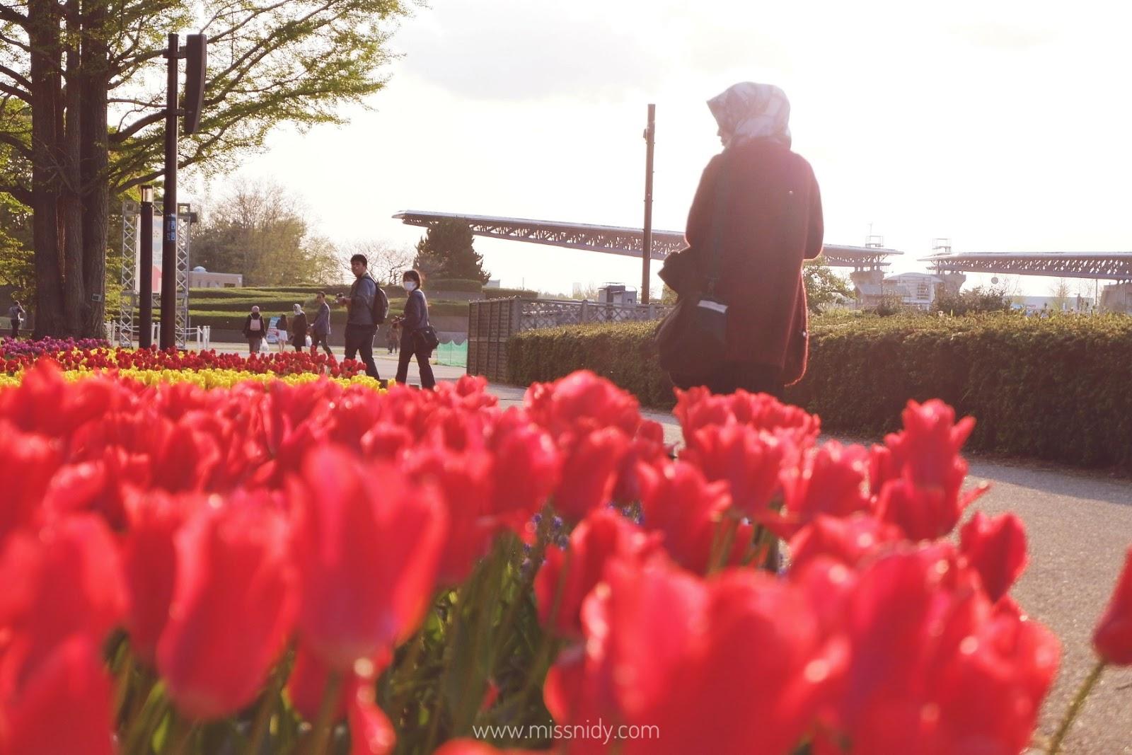 spring trip ke jepang