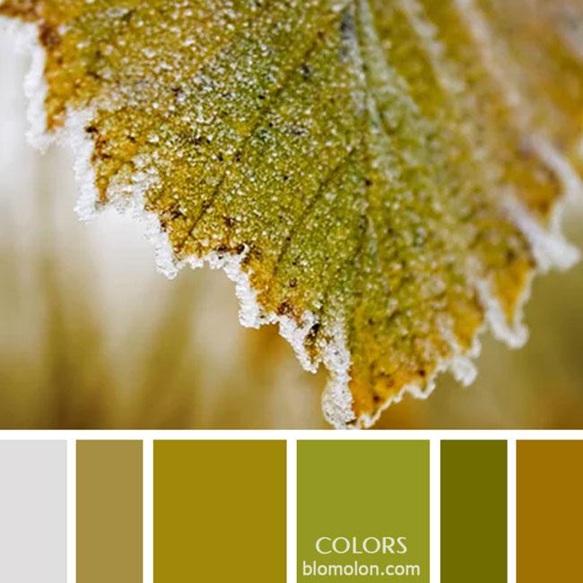 variedad_en_color_paletas_de_colores_65