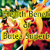 All Benefits of Butea Superba