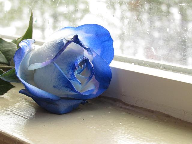 hoa hồng xanh nhuộm đẹp