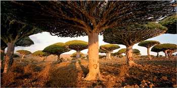 Gambar Hutan Terindah di Dunia 1