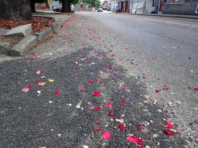 Płatki kwiatków w Sokołowie Małopolskim