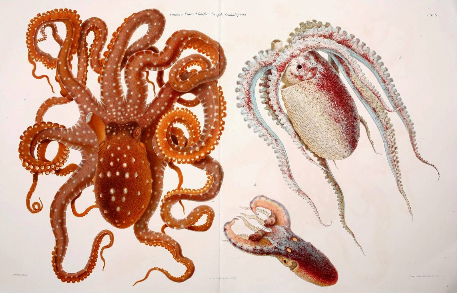 Natural History Of Cephalopods