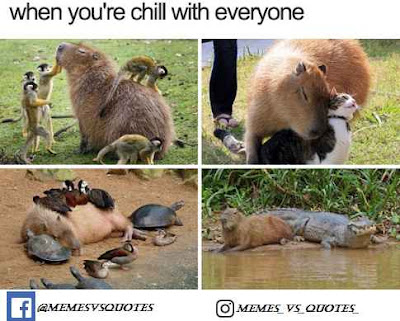 Chill with everyone