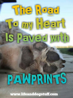 short dog quotes | paw prints on my heart cute dog quotes and sayings