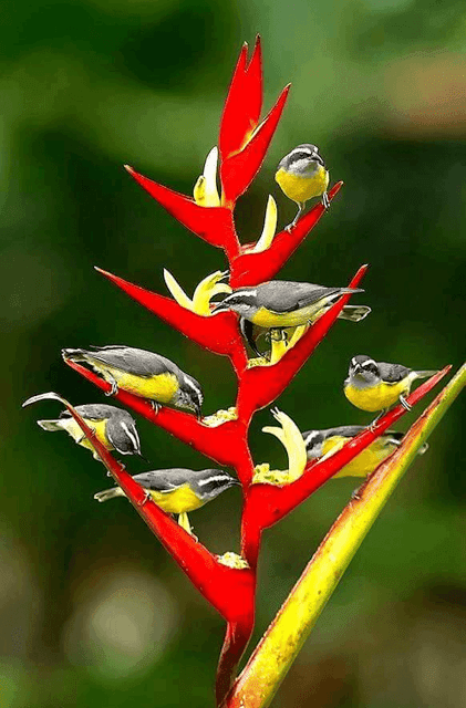 Android Mobile I Phone Love Birds HD Wallpaper