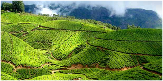 tourist destination in Munnar, Kerala