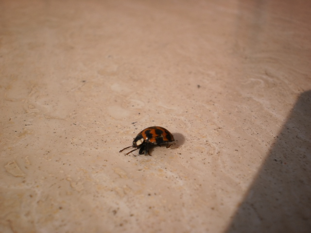 My urban pest control il risveglio degli insetti svernanti - Piccoli insetti in casa ...