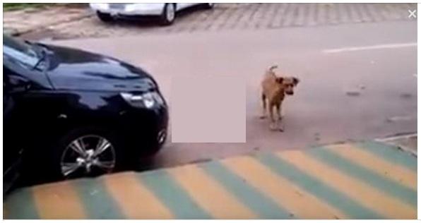 dog responding to music
