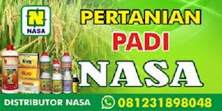 PADI HASIL MELIMPAH DENGAN PUPUK NASA