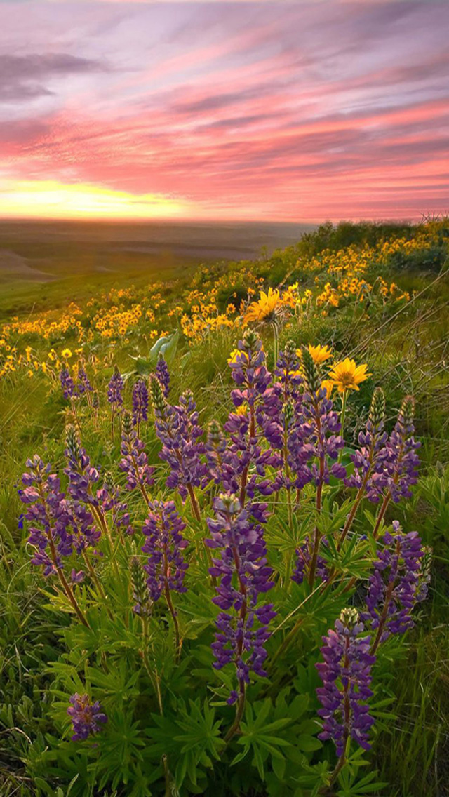 Free Download Spring Sunset iPhone 5 HD Wallpapers | Free HD Wallpapers for Your iPhone and iPod ...