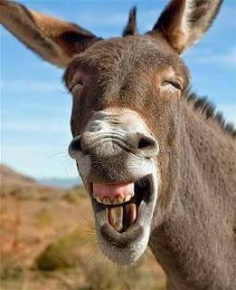 Un burro llamado CULO