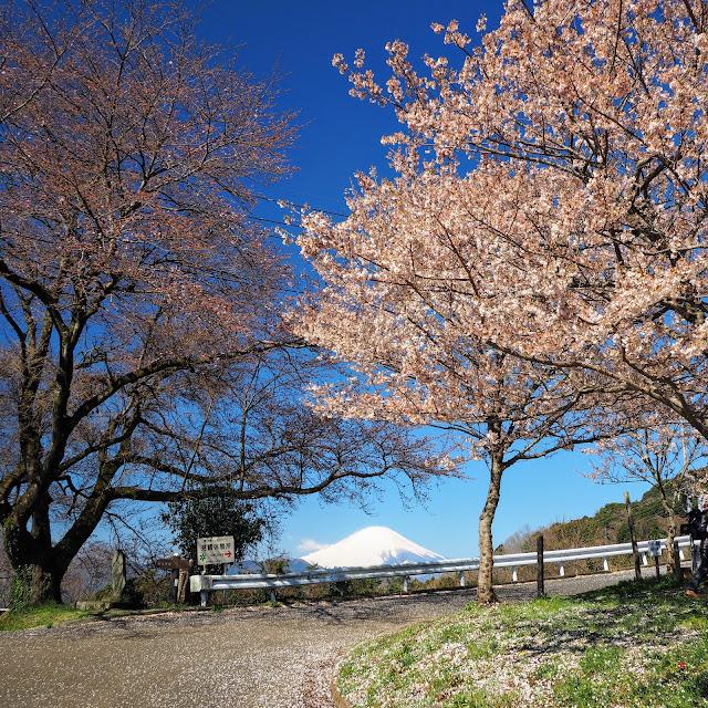 大井町 篠窪 富士見塚 桜 富士山