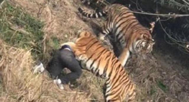 Panjat Pagar Elak Bayar Tiket Zoo, Lelaki Ini Maut Dibaham Harimau