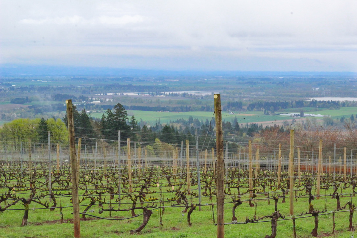 24 Hours in the Willamette Valley