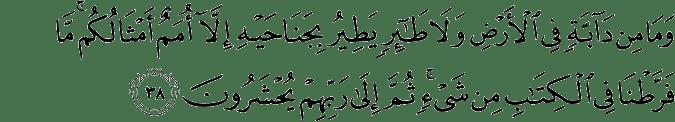 Surat Al-An'am Ayat 38