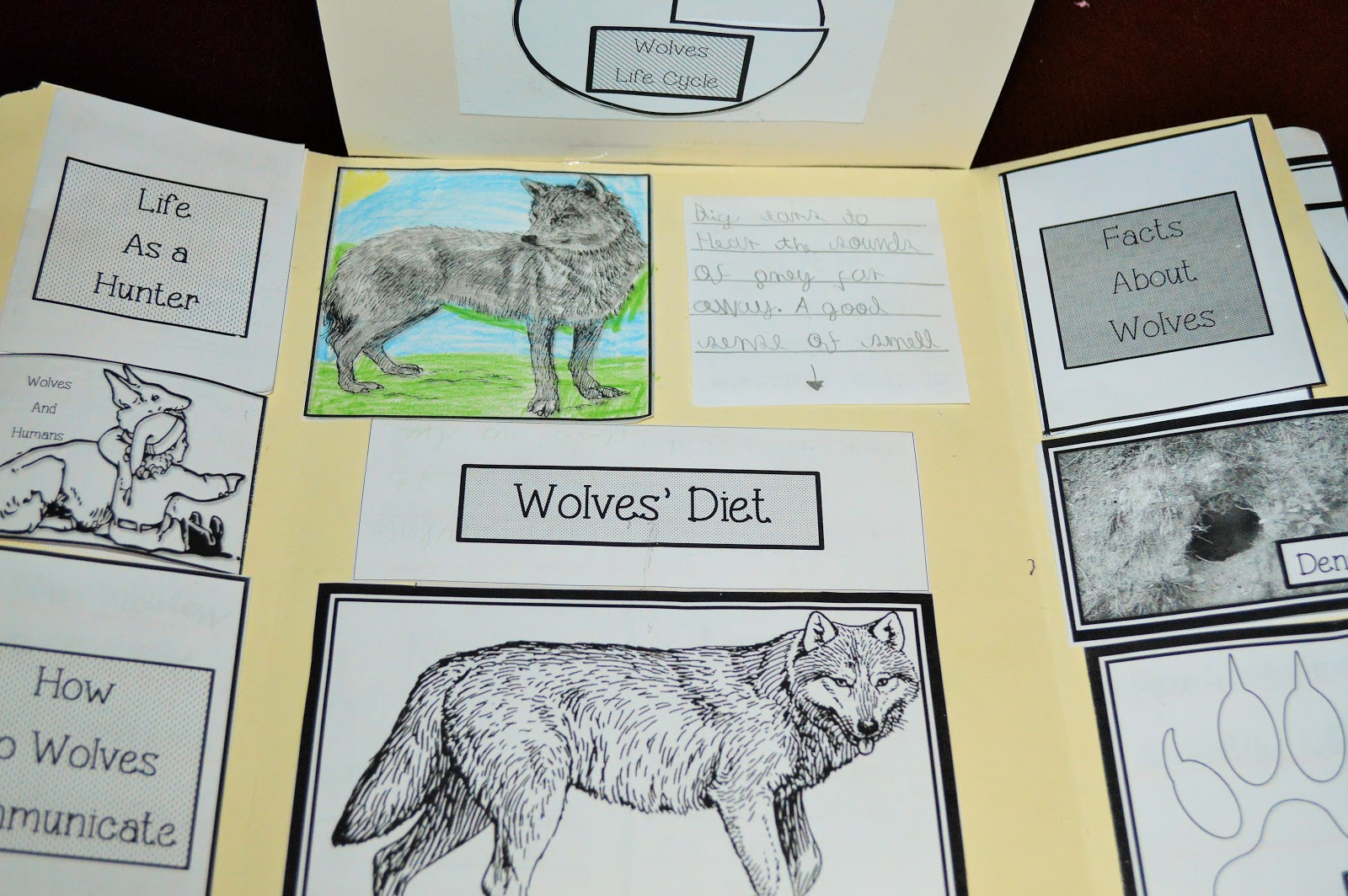 The Hermit Crabs Homeschool All About Wolves