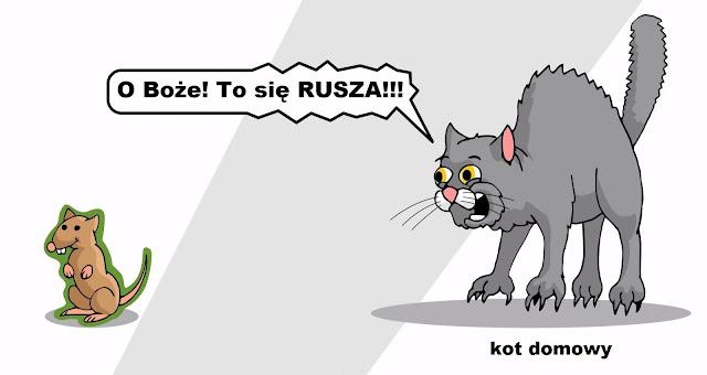 kot domowy a toksoplazmoza