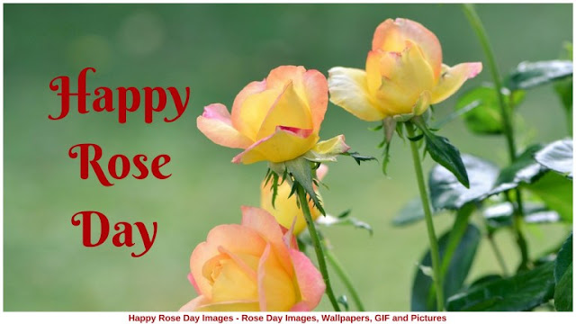 Happy Rose Day Wallpapers Download