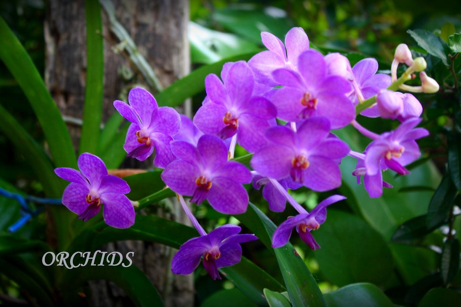starlight photo koleksi bunga